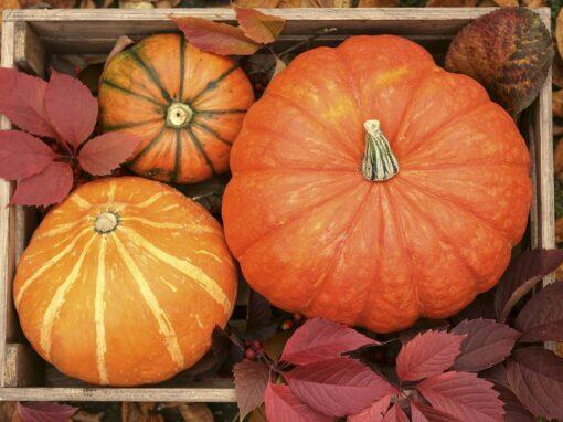 Cinema and pumpkin picking